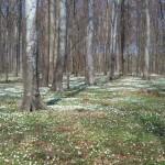 forårsskov 150x150 LØB, VIN OG SMAGNING